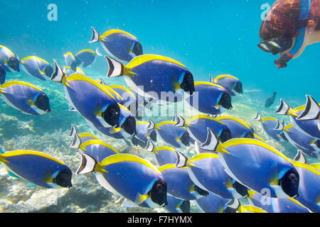 Tropical underwater scenery at Maldives Island, Indian Ocean - Stock Photo