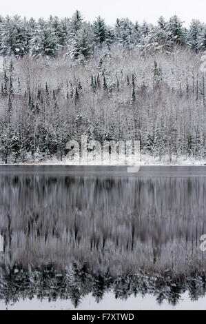 Still waters reflect winter forests at its edge.  Light snow overcast gray November sky.  Forests mirrored on water. - Stock Photo