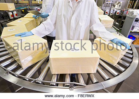 Worker handling large blocks of cheese at production line in processing plant - Stock Photo