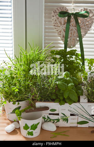 decoupage motive with herbs - Stock Photo