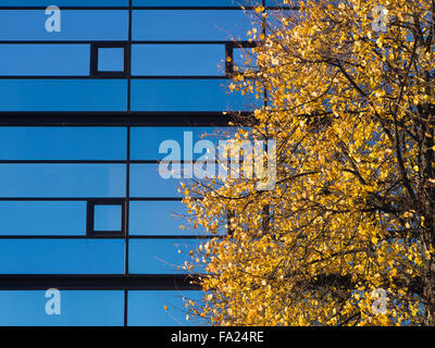 Blue sky reflected in commercial glass facade, yellow birch foliage in autumn, a sunny day in Oslo Norway - Stock Photo