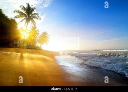 Palms on the sandy beach near ocean at sunrise - Stock Photo