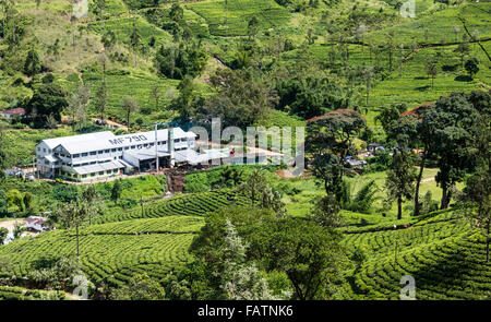 Strathdon tea factory (processing centre) on tea estate near Hatton in Sri Lanka. Pickers visible on path through - Stock Photo
