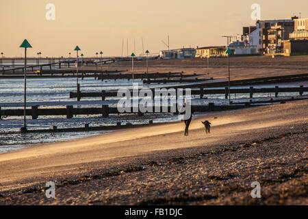 Unidentified Female Walking Dog on Beach at Thorpe Bay, Essex in Strong Wind with Sand Blowing - Stock Photo