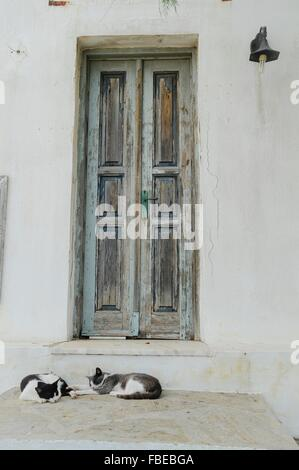 Two Cats Resting In Front Of Closed Doors - Stock Photo