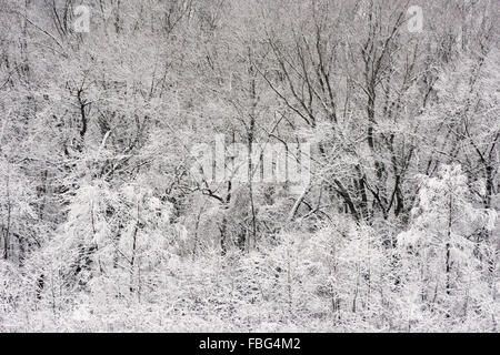 Snow covered trees on the edge of a forest in Marion County, Indiana - Stock Photo