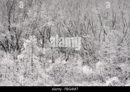 Snow covered trees on the edge of a forest hillside in Marion County, Indiana - Stock Photo