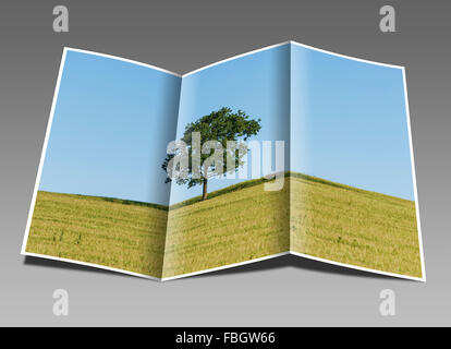 An oak tree and a Bench standing on a hill in a wheat field in summer - Stock Photo