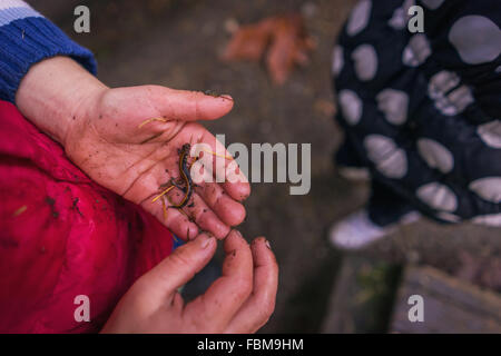 Elevated view of boy holding small lizard - Stock Photo