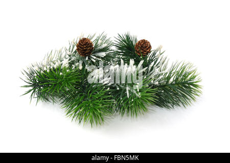 Conifer branches with cones sprinkled with snow on white background - Stock Photo