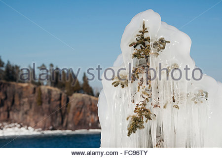 Frozen forest along Lake Superior in the winter with ice covered pine tree, Tettegoche, Minnesota, United States - Stock Photo