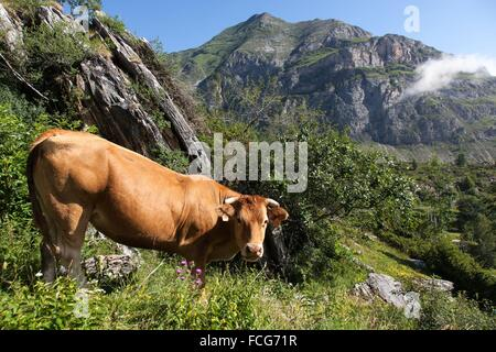 ESTIVE IN THE HAUTES PYRENEES (65), MIDI PYRENEES, FRANCE - Stock Photo