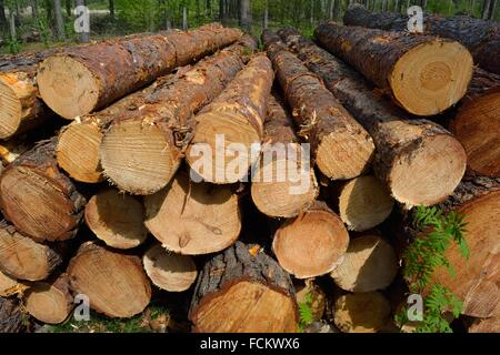 Wood Stack. Wood Harvest after a Storm, Gifhorn, Lower Saxony, Germany. - Stock Photo