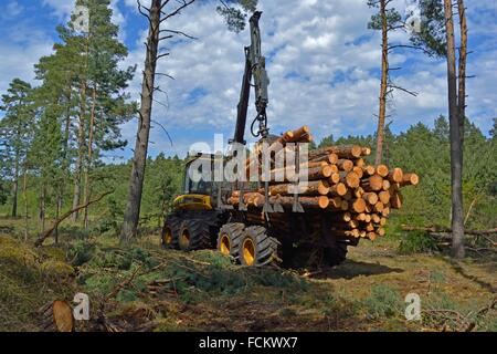 Charging a Forwarder. Wood Harvest after a Storm, Gifhorn, Lower Saxony, Germany. - Stock Photo
