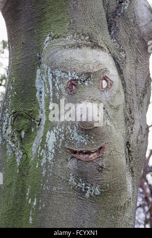 Tree with happy face appearing in the bark - Stock Photo