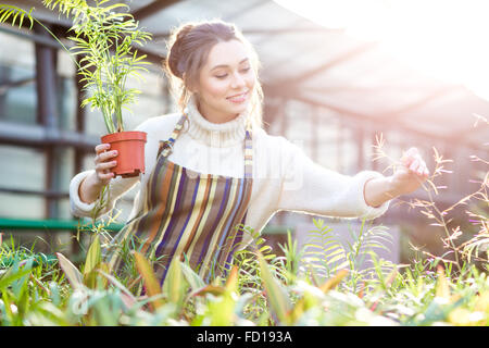 Smiling beautiful young female gardener in white sweater and striped apron taking care of plants and flowers in - Stock Photo