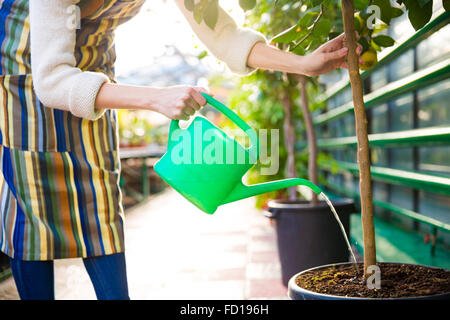Woman in striped colorful apron pouring tree in pot with green watering can in greenhouse - Stock Photo