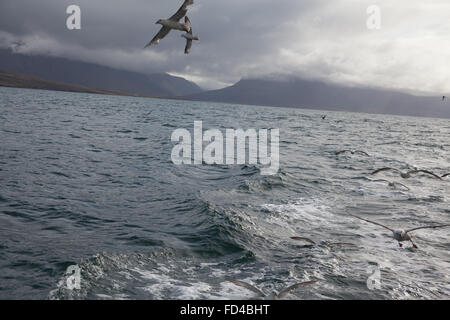 Seagulls Flying Over Sea Against Cloudy Sky - Stock Photo