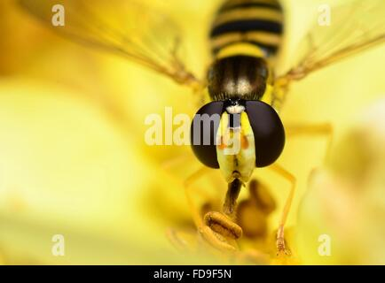 Extreme Close-Up Of Honeybee - Stock Photo