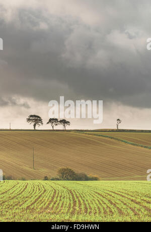 Four trees on the hill - Stock Photo