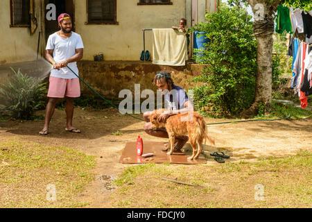 Family washing dog in Port Vila, Vanuatu - Stock Photo