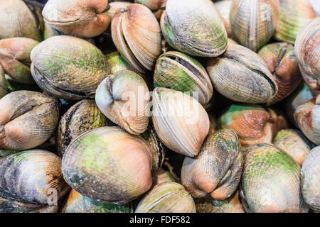 Fresh mussels on a market - Stock Photo