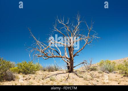 A dead tree in Mojave National Preserve, California - Stock Photo