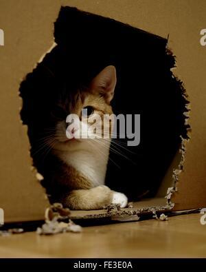 Cat In Cardboard Box - Stock Photo