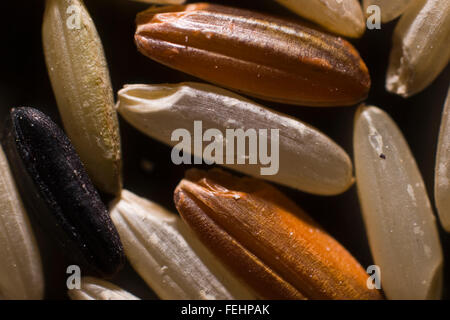 Mixture of white, brown and red rice grains close up - Stock Photo