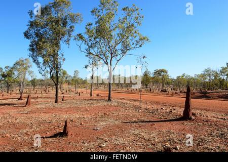 Termite Mounds, Gulf Savannah, Queensland, Australia - Stock Photo