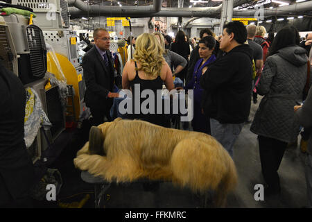 A Briard takes a nap as handlers take a break, backstage during the 2016 Westminster Dog Show in New York. (Photo - Stock Photo