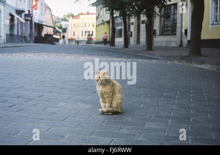 Lonely red tabby cat sitting on the old empty street. Photo is taken on 35 mm film camera therefore there is a grain - Stock Photo