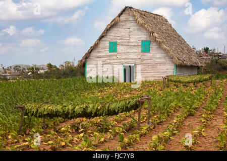 Tobacco drying hut and fields at Vinales, Pinar del Rio Province, Cuba, West Indies, Caribbean - Stock Photo