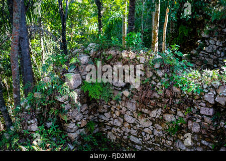stone wall covered with plants in a tropical forest. Ruins of slave houses on Cuba - Stock Photo