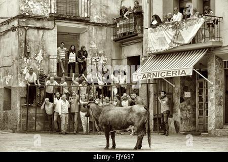 Running of the bulls through the streets of Igea, village of La Rioja, Spain - Stock Photo