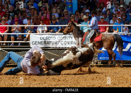 Florida, USA. 12th March, 2016. Thousands of rodeo enthusiasts turned out to watch the 88th Arcadia Rodeo Championships - Stock Photo