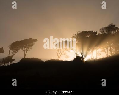 Sunburst  at sunrise through trees at Devil's Punchbowl State Natural Area. Oregon - Stock Photo