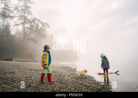 Boy and girl playing with golden retriever puppy dog on foggy beach - Stock Photo