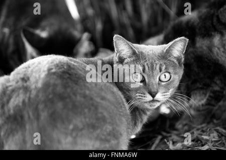 Feral cat on Palm Beach Island - Stock Photo