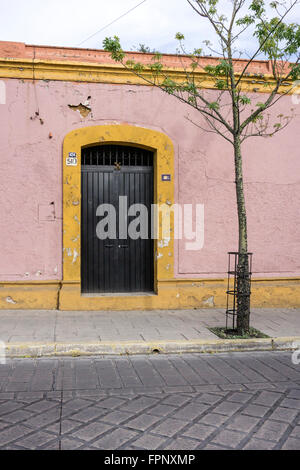 spindly young sidewalk tree outside black steel gate with yellow surround in old pink painted plastered garden wall - Stock Photo