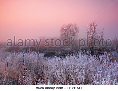 Misty dawn on the field - Stock Photo