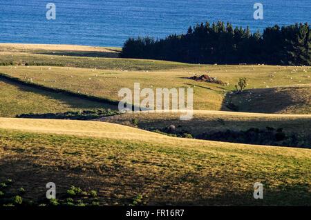 Beautiful countryside around Kuri Bush in Otago province, New Zealand - Stock Photo
