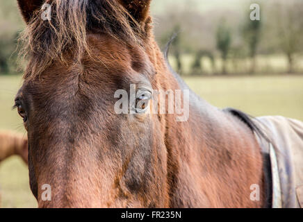 Through the eyes of a Horse - Stock Photo