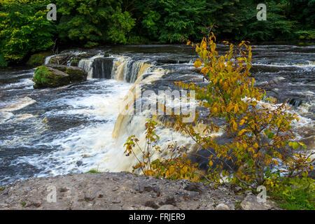 Upper Falls, Aysgarth Falls, Wensleydale, Yorkshire Dales National Park, England, UK - Stock Photo