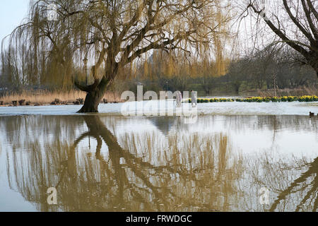 A family wading through dangerous floodwater flowing over the banks of the River Great Ouse Embankment, Bedford, - Stock Photo