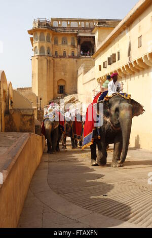 Elephants carrying tourists to the Amber Fort, Jaipur, Rajasthan, India - Stock Photo
