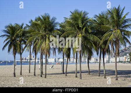 Palm trees on Copacabana Beach - south of the city - Stock Photo