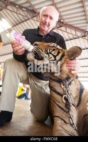 Man bottle feeding a tiger through temple grounds at Tiger Temple in Northern Thailand at Wat Pa Luang Ta Bowa Yannasampanno - Stock Photo