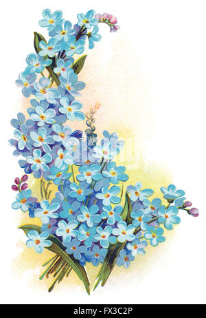 Colour illustration of forget-me-nots (genus myosotis) against a yellow background. - Stock Photo