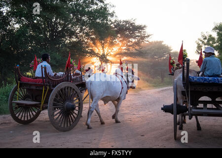 Men on Ox and cart making their way along dusty dirt tracks at sunset in Bagan, Myanmar - Stock Photo